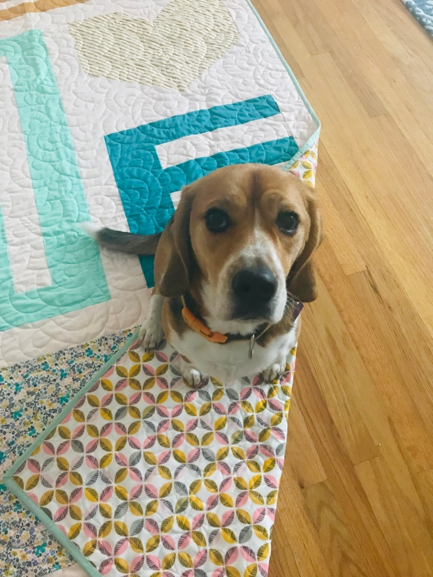 Show Love quilt with Cloud Nine back; and my Beagle Winston